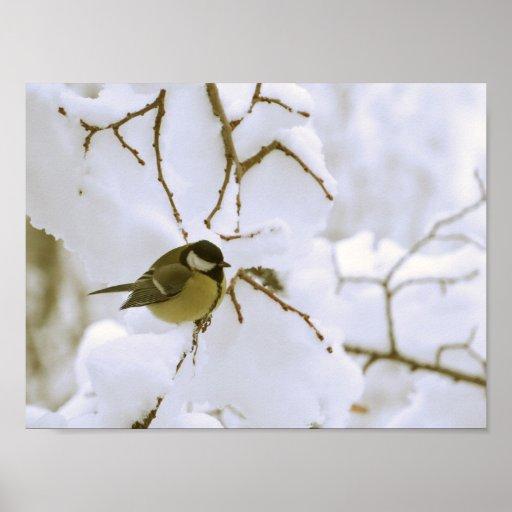 Bird Winter Photo Value Poster Paper (Matte)