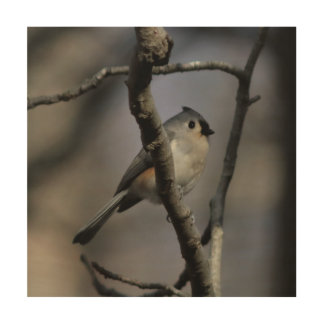 Bird, Wood Photo Print. Wood Wall Decor