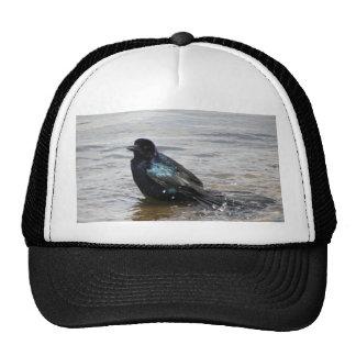 Birdbath Hat