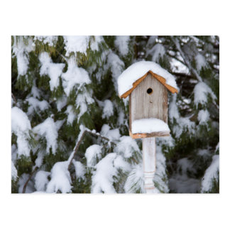 Birdhouse near pine tree in winter postcard
