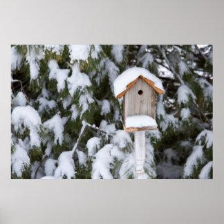 Birdhouse near pine tree in winter poster