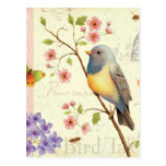 Birds and Bees Postcard