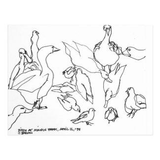 Birds at Mingus Park, Coos Bay, Oregon Postcard