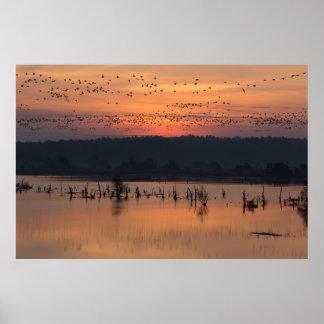 Birds at sunrise poster