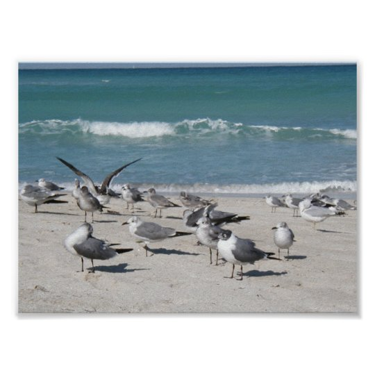 Birds at the beach poster