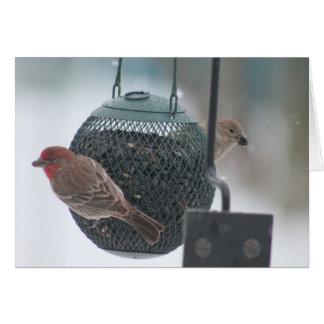 Birds eating at feeder - Card