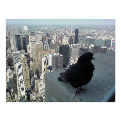 Bird's Eye View of New York Post Card