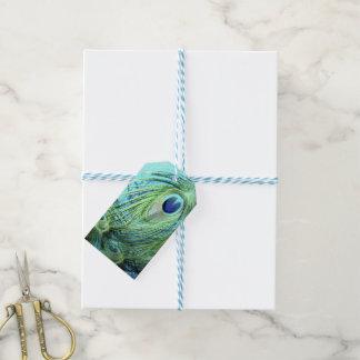 Bird's Eyes Gift Tags