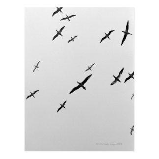 Birds flying postcard
