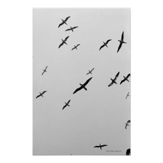 Birds flying poster