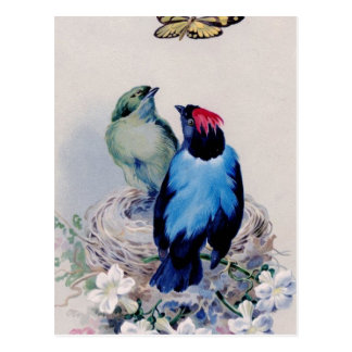 Birds in nest postcard
