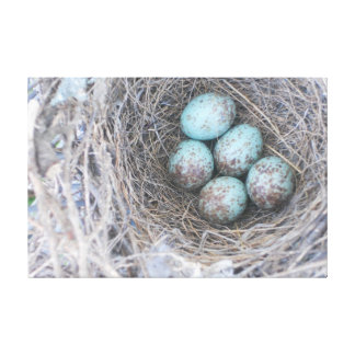 Bird's Nest Blue Eggs Nature Photography Canvas Canvas Print