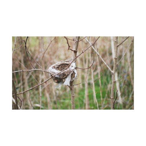 Birds Nest Stretched Canvas Print