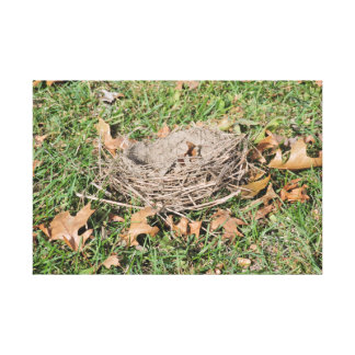 Birds Nest Canvas Print