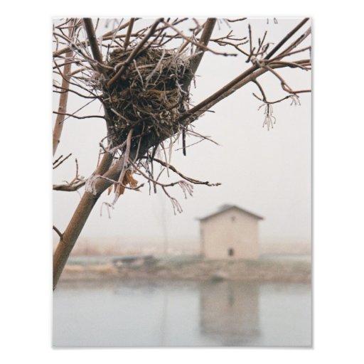 Bird's Nest Home Photographic Print