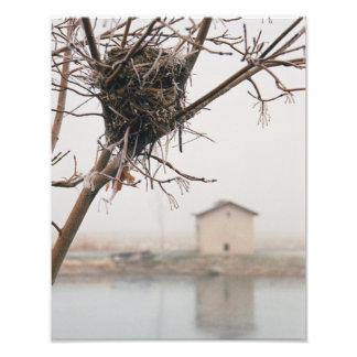 Bird's Nest Home Photograph