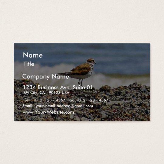 Birds Oceans Beaches Business Card