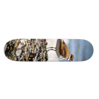 Birds Oceans Beaches Skate Deck