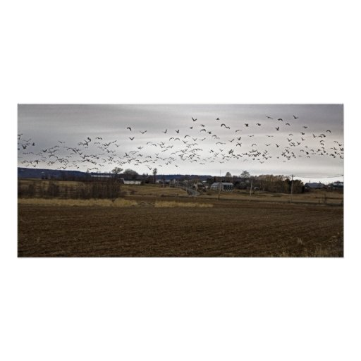 Birds Of A Feather Flock Together fine art print