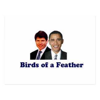 Birds of a Feather Postcard