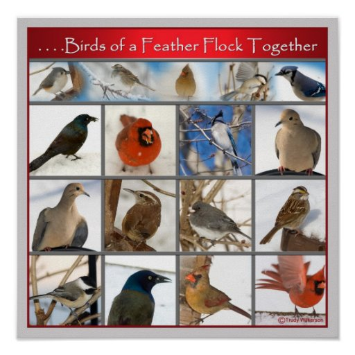 Birds of a Feather (POSTER) Poster