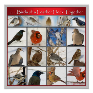 Birds of a Feather POSTER Poster