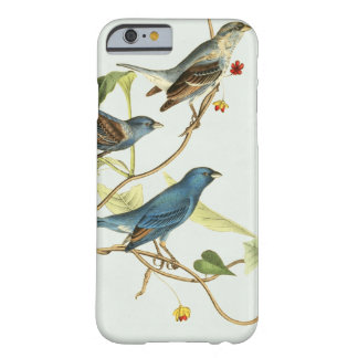 Birds of America Indigo Bunting - Blue Barely There iPhone 6 Case