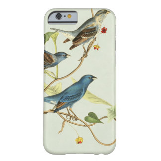 Birds of America Indigo Bunting - Green Barely There iPhone 6 Case