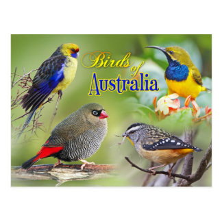 Birds of Australia Postcard
