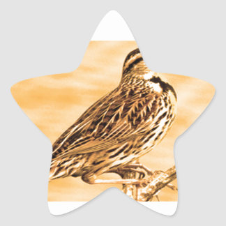 Birds of Ontario Kids Children Zoo Nature School Star Sticker