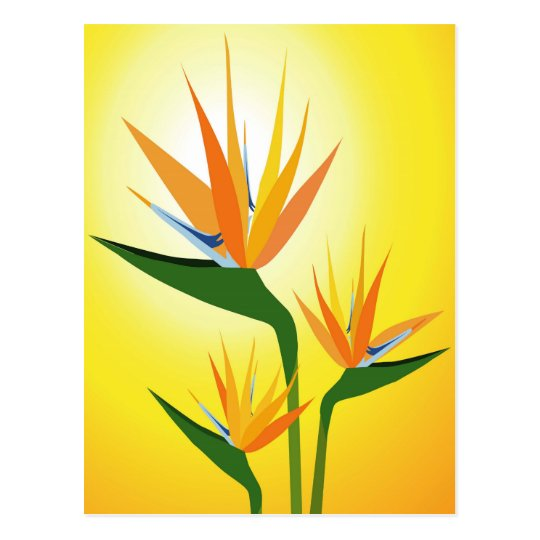 BIRDS OF PARADISE FLOWER DESIGN POSTCARD