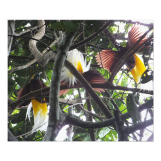 Birds of Paradise Photo Print