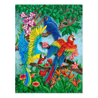 Birds of Paradise Postcard