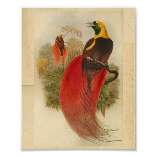 Birds of Paradise Red Green Yellow Vintage Print