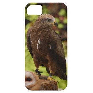 Birds of prey iPhone 5 covers
