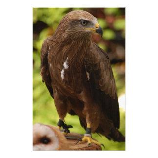 Birds of prey custom flyer