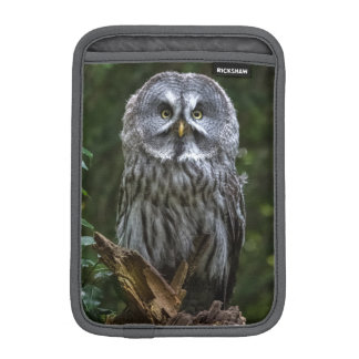 Birds of prey Great grey owl photograph case