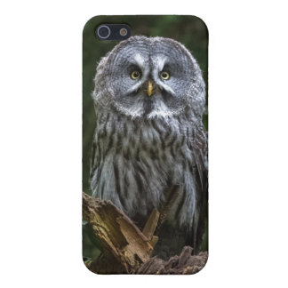 Birds of prey Great grey owl photograph phone case iPhone 5/5S Case
