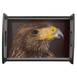 Birds of prey hawk photograph serving tray