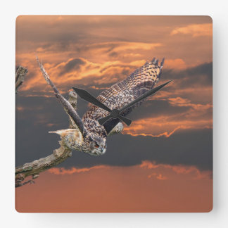 Birds of prey owl photograph in the sunset clock