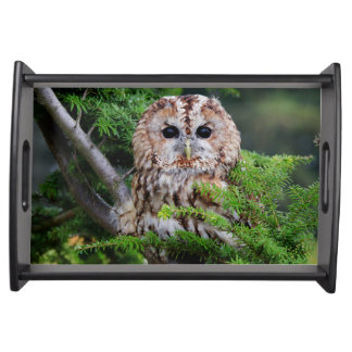 Birds of prey owl photograph tray