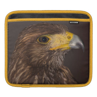 Birds of prey photograph hawk case