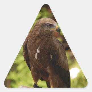 Birds of prey triangle sticker