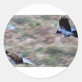 birds of prey stickers
