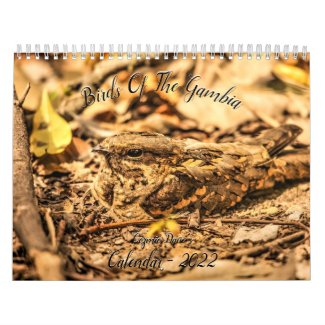 Birds of The Gambia 2022 Calendar