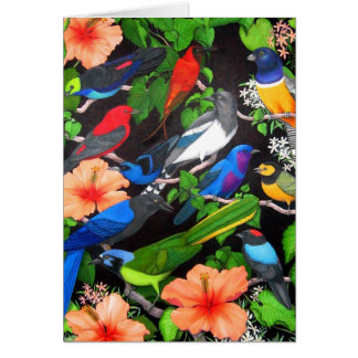 Birds of the Yucatan Peninsula Greeting Card