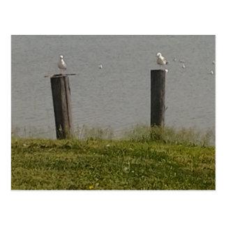 Birds on a perch. postcard