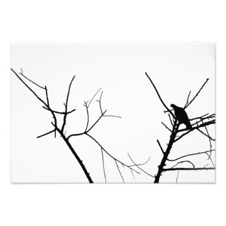 Birds on a tree photo print