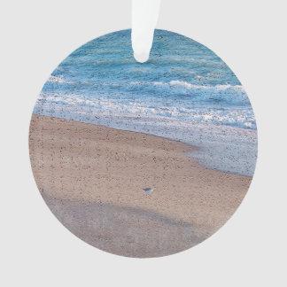 birds on beach crackle sea shore florida