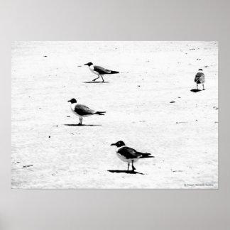 """""""Birds on South African Beach"""" JTG Art Poster"""
